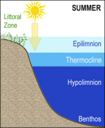 Graphic showing summer lake stratification